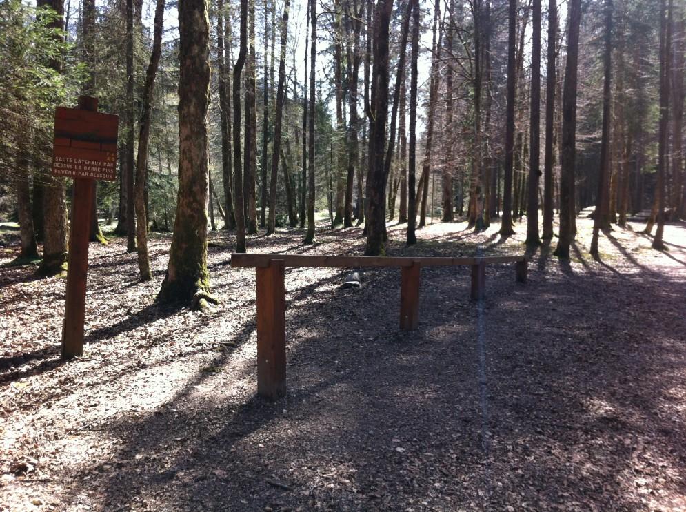 Woods Activities
