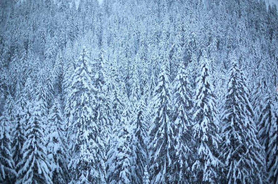 Morzine Snowwy Trees Mountain Mavericks France Ski Snowboard Powder Photo