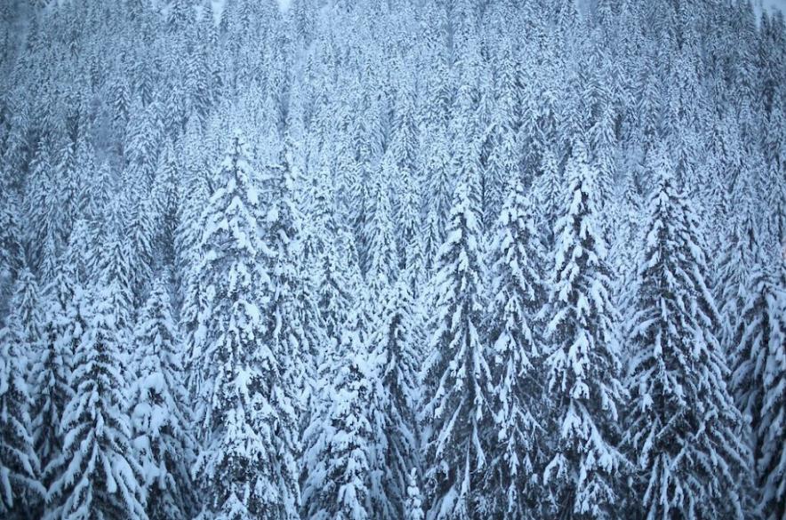 Morzine Tree Ski - Snow on trees - Mountain Mavericks